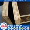 Madeira compensada Shuttering da madeira compensada marinha para o molde concreto