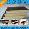Shandong Factory 12m m 15m m 18m m 21m m Black Film Shuttering Plywood