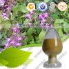 Extrait corné de Weed de chèvre d'extrait de Sagittatum d'Epimedium d'approvisionnement d'usine