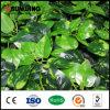 Seto y cerca artificiales barato naturales del boj del certificado del SGS para el jardín
