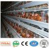 Système de cage de couche de ferme de poulet de couche de ferme avicole