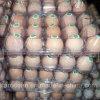 Doos van de Verpakking Pet/PP van het Dienblad van eieren de Plastic Container Gerecycleerde