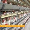 Cage de poulet de batteries pour le poulet de couche