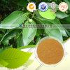 Borneol 95%-99%/Camphor Tree Extract