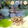 Caulis organique Perillae de médecine d'herbe d'approvisionnement de fabricant