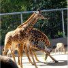 스테인리스 밧줄 동물원 담