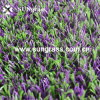 Alto-densità Lavender Artificial Grass (SUNQ-HY00066) di 22mm