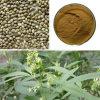 Polvo orgánico certificado de la proteína del cáñamo/de la proteína del cáñamo Protein/Hemp