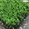 15mm Olive Green Tennis Grass, Artificial Grass