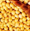 Isoflavonas del extracto de la soja el 20%, el 40%, el 60%