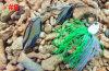Pêchant l'amorce en laiton de fileur de lame de qualité supérieur d'amorce de bourdonnement d'attrait (HWZ008)