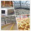 Customized Low Cost Prefabricated Steel Structure Poultry House