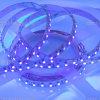 Luz de tira ideal mencionada del color SMD3528 60LEDs RGB LED del Ce