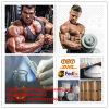 Pharmazeutische Steriods Puder-Bodybuilding Methoxydienone Steroide CAS 2322-77-2