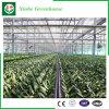 Стеклянная система Hydroponics зеленой дома для овощей/цветков/плодоовощ