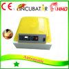 Presidenza automatica trasparente dell'uovo per la covata delle incubatrici differenti del fagiano delle uova
