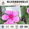 feuille claire de polycarbonate de film de PC d'enduit de 1.0mm UV-Anti pour la Chambre verte et la cloche d'élevage