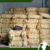 Ug Grade Sisal Fiber para Buffing Natural Color