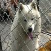 La casa de perros industrial de China persigue las jaulas y la otra casa de las aves de corral