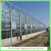 Low Price를 가진 농업 Hydroponics Growing System Glass Greenhouses