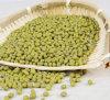 Grüne Bohnen-Auszug