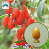 Extrato Wolfberry Fruit PE Goji Berry