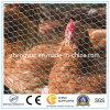 Acoplamiento de alambre hexagonal revestido galvanizado sumergido caliente de pollo de la red/PVC de las aves de corral