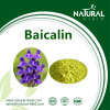 Baicalin Puder, Baicalin Auszug CAS: 100647-26-5 (27462-75-5)