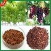 Supplément alimentaire de soins de santé d'extrait de graine de raisin d'OPC de la qualité 95%