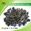 Fabricante Proveedor secado orgánico Hongo Negro