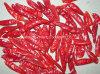 S/poivron rouges secs par collecte neuve
