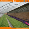 Chambre verte solaire de vente chaude pour l'élevage de fraise