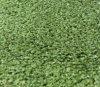 Lawn sintético com Short Yarn (CPT-10PP)