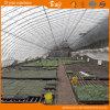 식물성 설치를 위한 높은 비용 성과 태양 온실