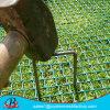 草の保護網またはプラスチック格子かプラスチック舗装