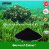 Удобрение Seaweed 2017 нового изделие