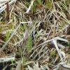 Kingtop 1m Film wdf130-1 van de Druk van de Overdracht van het Water van het Ontwerp van de Camouflage van de Breedte