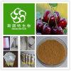Extrato chinês da cereja, 10:1 de Che Li Zi P.E.