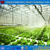 Serre chaude en verre de Multi-Envergure de qualité avec le système hydroponique pour le prix d'agriculture d'Angriculture&Aquaponics&Cucumber