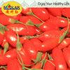 Nêspera fruta Goji