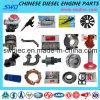 Pièces professionnelles de moteur diesel pour le camion chinois