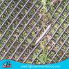 極度の品質のプラスチック平らなネットか泥炭の補強の網または草の保護プラスチック網