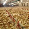 Équipement de alimentation de poulet chaud de la vente 2015