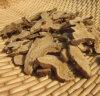 Polvo blanco del extracto del extracto/Bai Zhu de Atractylodes
