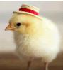 1% ; 2% ; 4% ; 8% ; Prémélange de 10% Nosiheptide pour la volaille et le bétail de porc ;