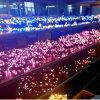 A corda de Deocration do Natal do diodo emissor de luz ilumina luzes ao ar livre da corda
