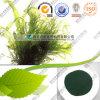 Fabricantes al por mayor de Spirulina de polvo de Spirulina orgánicos