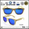 Ray Band Sunglasses