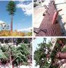 Commmuincationの松の木タワー