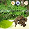 Raiz natural Dipsaci da raiz do Dipsacus da medicina da erva